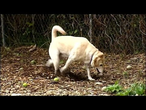 Homeowners face fines for dog poop in their own yard!
