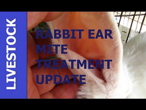 LIVESTOCK - Animal Husbandry Rabbit Ear Mite Treatment UPDATE