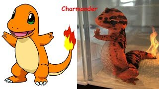 Pokemon in Real Life | Pokemon Characters as Monsters 2017