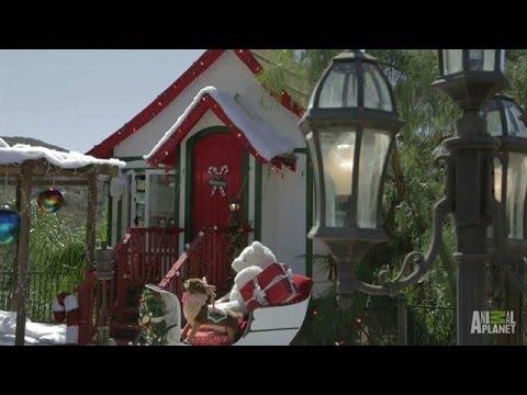 Santa's Sunny Workshop   Treehouse Masters