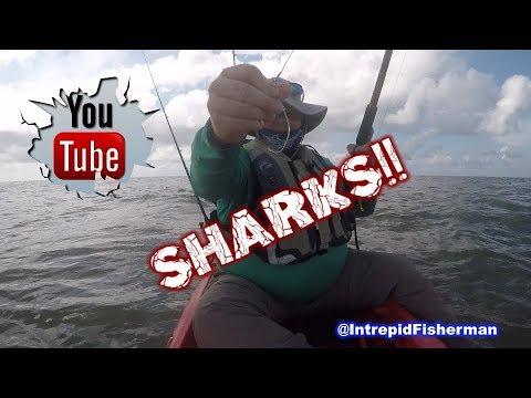 Shark Fishing on Kayaks BTB High Island Texas