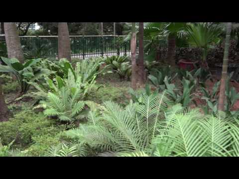 The Hong Kong Zoological and Botanical Gardens (HKZBG) 21st December 2015