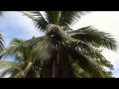 Costa Rica w/ My Best Friend | Travel Vlog