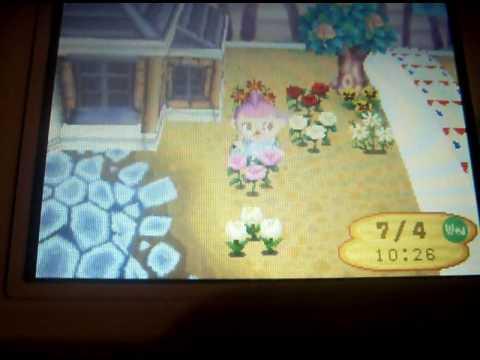 I have a pink rose!