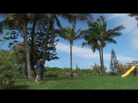 Cutting Down a Coconut Palm