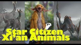 Star Citizen | New Xi