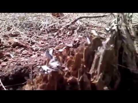 Flying ants...not Termites