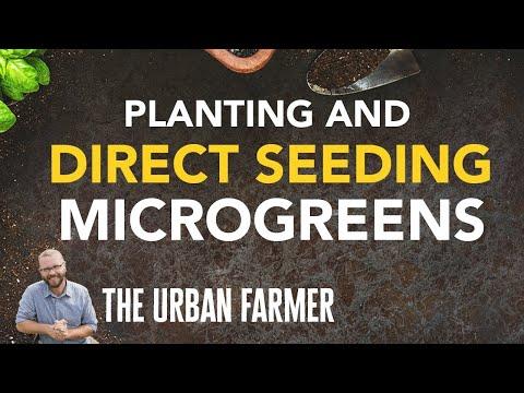 Planting microgreens & Direct seeding