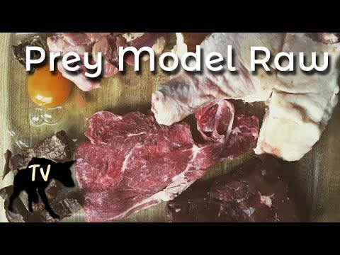 German Shepherd mix eating Prey Model Raw | Raw Feeding Vlog