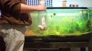 Wayne S Insight How To Diy Co2 For The Aquarium