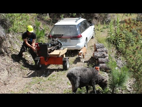 Angry Ram supervising wood splitting
