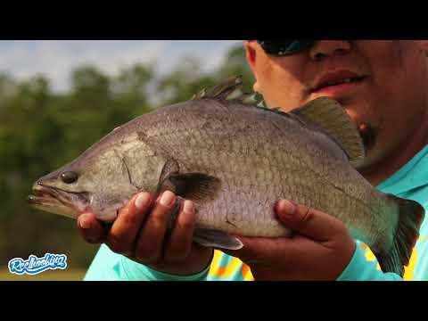 Fly Fishing for Barramundi in Florida