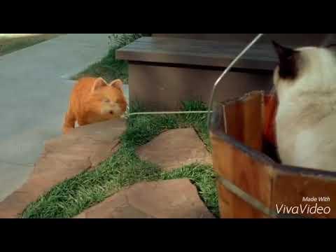 Xxx Mp4 Garfield Bangla Movies Part 2 3gp Sex