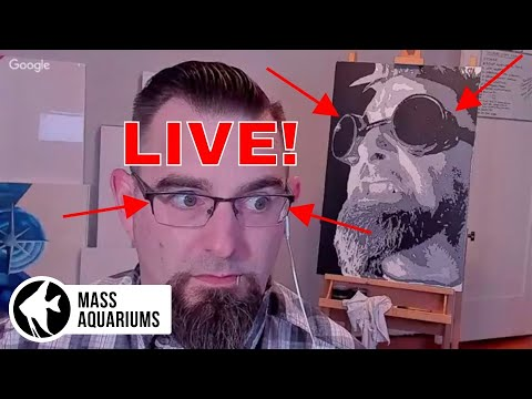 LIVE with Corvus Oscen! Q&A with Joel the Savvy LIVE STREAM MACHINE