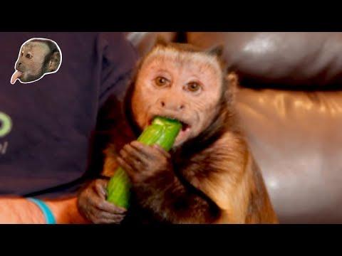 Monkey Feeding Pet Human Baby Cucumber SO CUTE