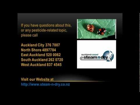 Pest Control-How to Get Rid of Carpet Beetle
