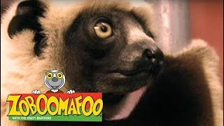 Zoboomafoo 135 - Who's in the Egg? (Full Episode)  Episode 1 136