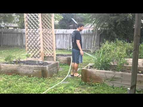 How to Get Rid of Fleas and Bugs in the Back Yard