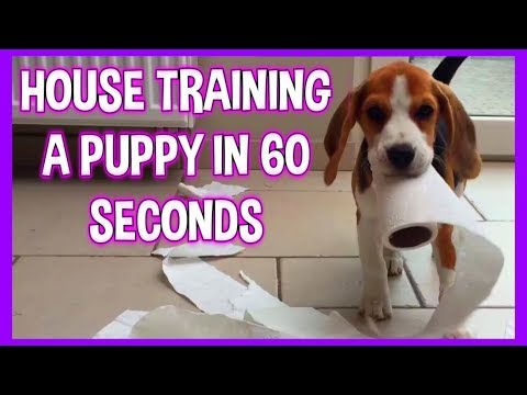 House Training your Cute Puppy , Explained in 60 seconds!!!