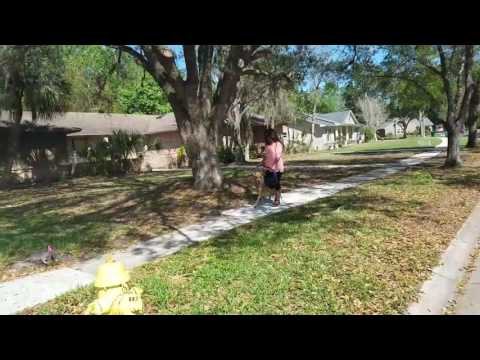 Leash Reactivity Barking & Lunging solved with Prong Collar  - Take the Lead K9 Training