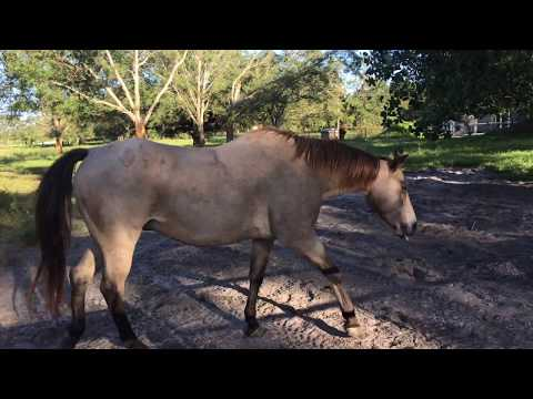 BOUGHT ANOTHER HORSE!?