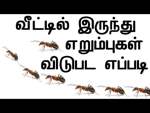 வீட்டில் இருந்து எறும்புகள் விடுபட எப்படி| Get Rid Of Ants From Home In Tamil