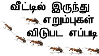 Get Rid Of Ants From Home In Tamil