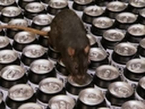 MythBusters: Hidden Nasties -  Rat Pee Soda