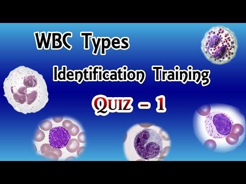 WBC Identification Training  Quiz  ( Part 1/3 )
