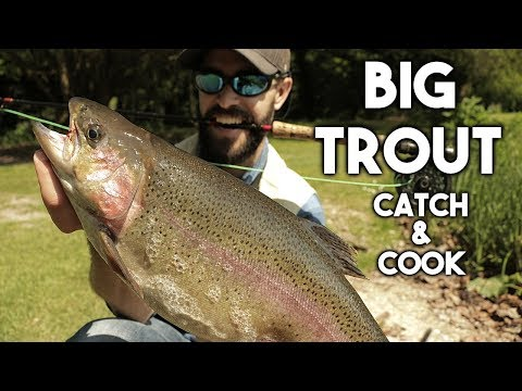 Catch and Cook FISH {GRAPHIC} GUT, CLEAN & FILLET