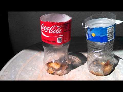 Using a coke bottle to catch flies