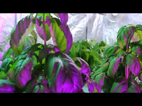 Hydroponic Grow Systems | Grow Box and Grow Room Showcase