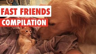 Fast Friends Pet Videos Compilation 2017