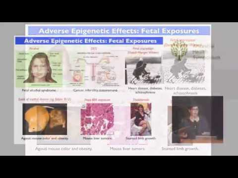 Epigenetics & the Multigenerational Effects of Nutrition, Chemicals and Drugs — Jill Escher (AHS14)