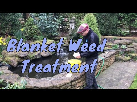 How to get rid of blanket weed in a pond | How to apply Multi Clear