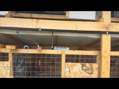 Meat Rabbit Hutch & Operation