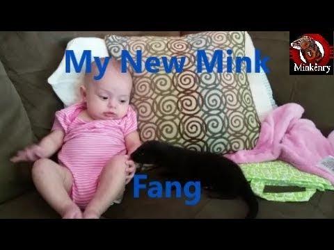 My New Mink Fang
