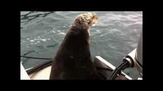 Alaska Killer Whales vs. Witty Otter
