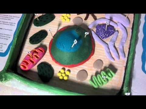 Little prowlers plant cell project