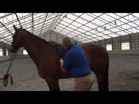 How to Fit an English Saddle