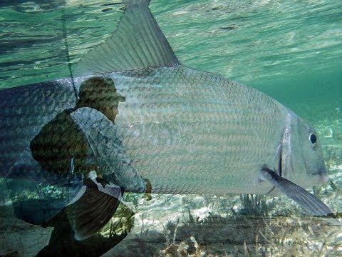 Florida Fly Fishing / Digital City