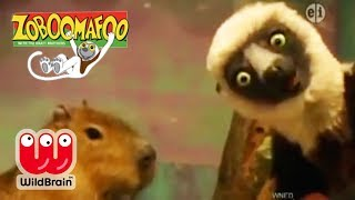 Zoboomafoo | Episode: Lemur Explores Zoo Animals | Animals For Kids