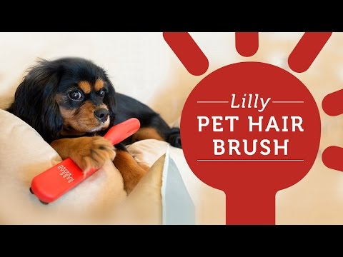 Easily remove pet hair from couch and pillows with the Lilly Pet Brush