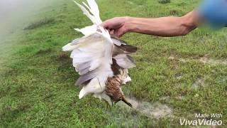 nhặt chim cùng xạ thủ pcp condor hunting