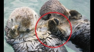 Most INTELLIGENT Animals on Earth