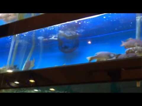 The Fish Decider