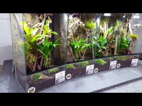 Arboreal tarantula vivarium terrarium avicularia