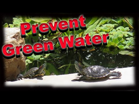 Get your pond ready for summer... prevent green water!