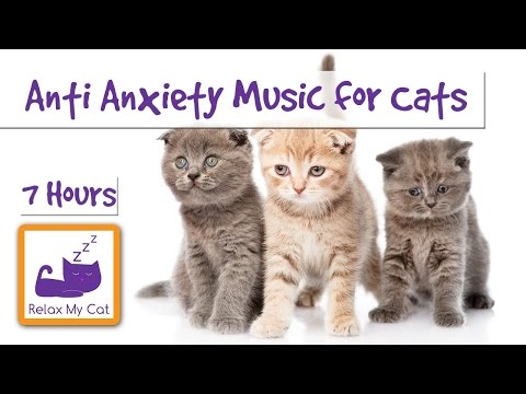 Extra Long Anti-Anxiety Music for Cats Playlist! Anxiety Reducing Music! 🐱 #ANXIETY06