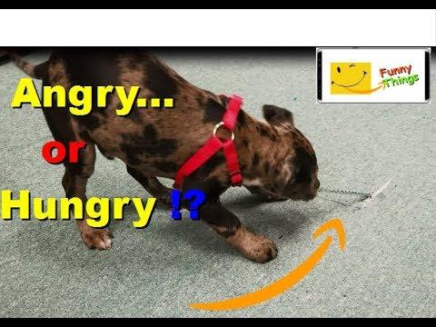 Hungry DOG eating my carpet  LOL